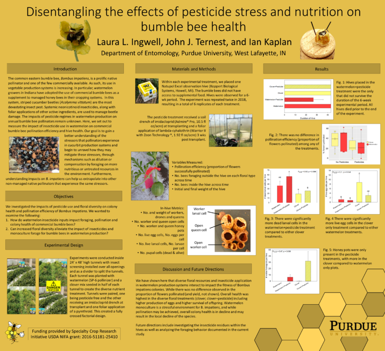 Bumble bee health poster