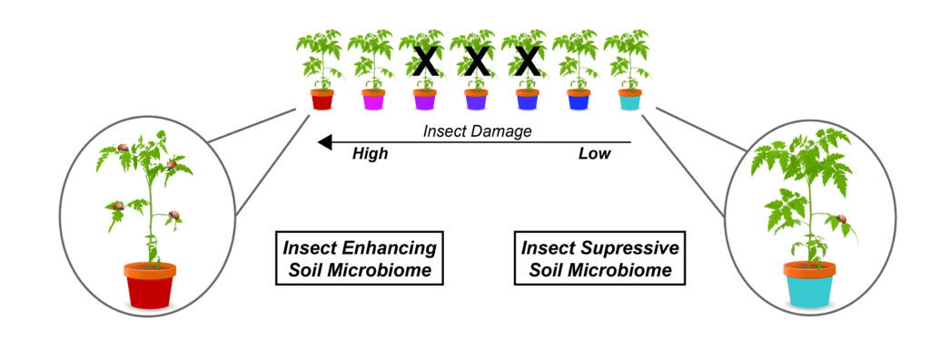 Engineering Beneficial Crop Microbiomes