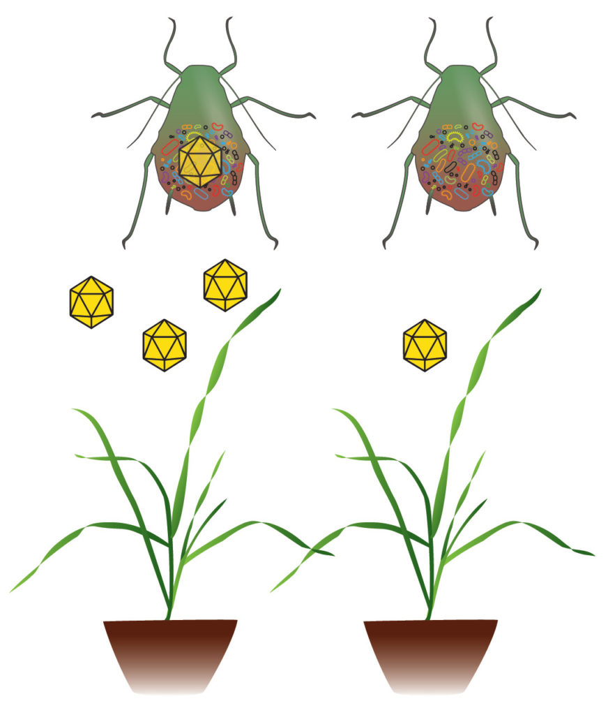 Vector Microbiomes - Plant Pathogen Dynamics