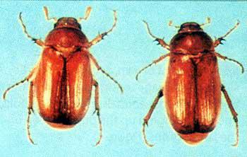 Purdue University Entomology News